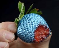 Blue strawb