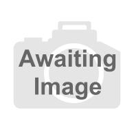 Heavy Duty Radiator Sealer 28.4G  Fast working metallic powder